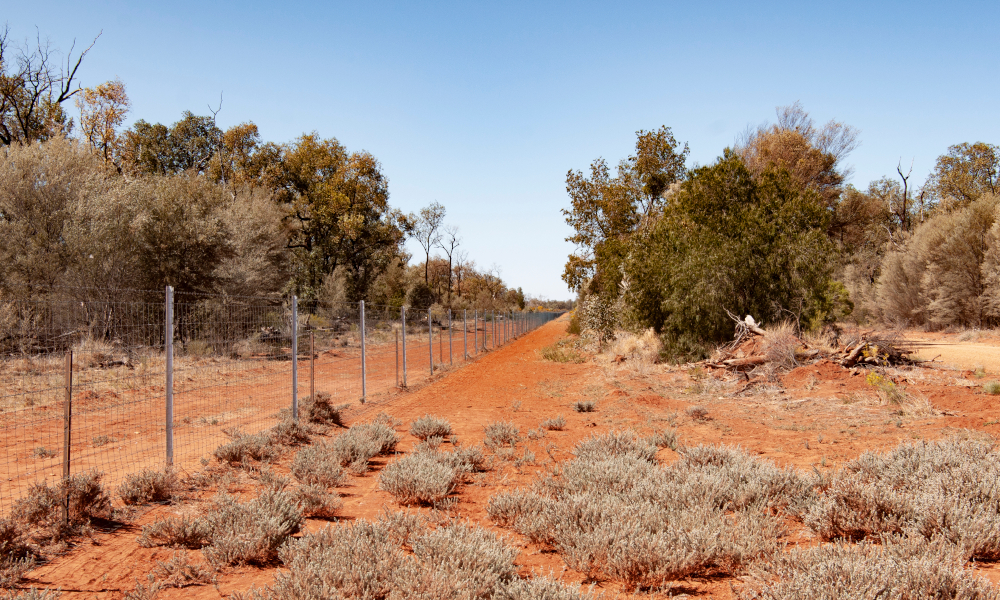 Multi-million dollar tender now open for the construction of the world's longest wild dog fence