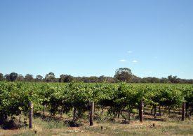 Limestone Coast vineyard on the market