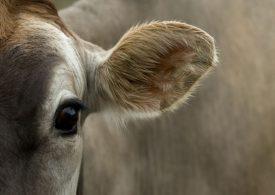 2021 Tasmanian Dairy Business of the Year award winner announced