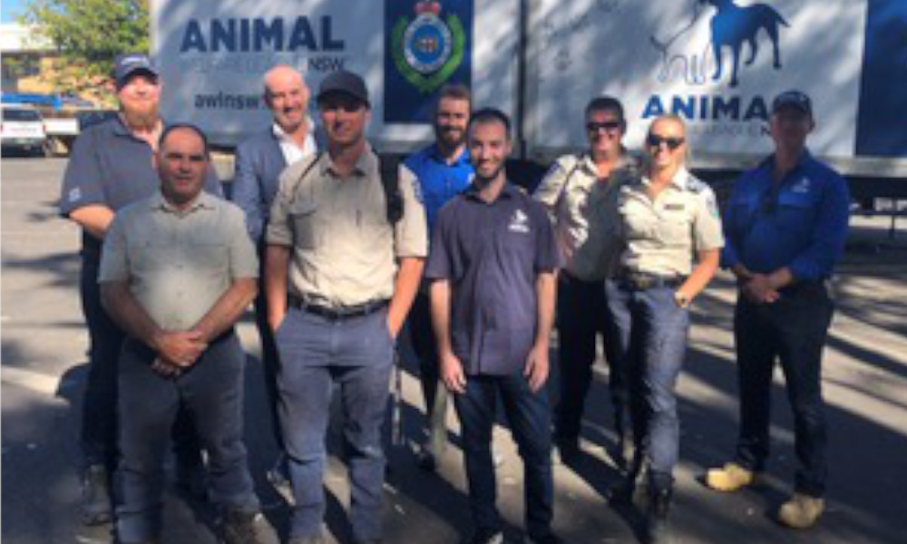 Partnership to drive down rate of animal abandonment