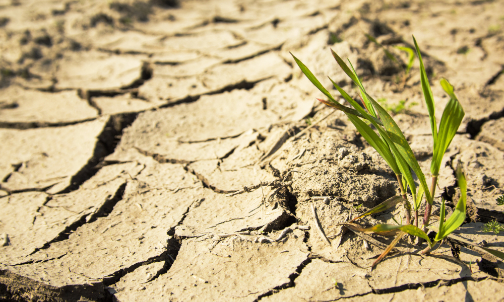 $8 million to be poured into drought resilience in agriculture