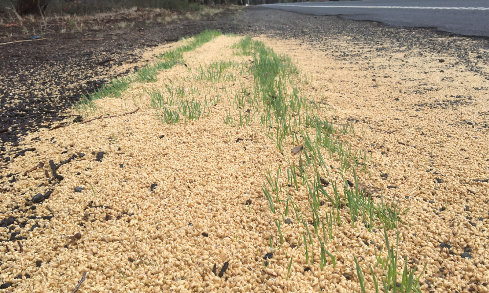 Roadside grain dumping – risking more than farmer's $$