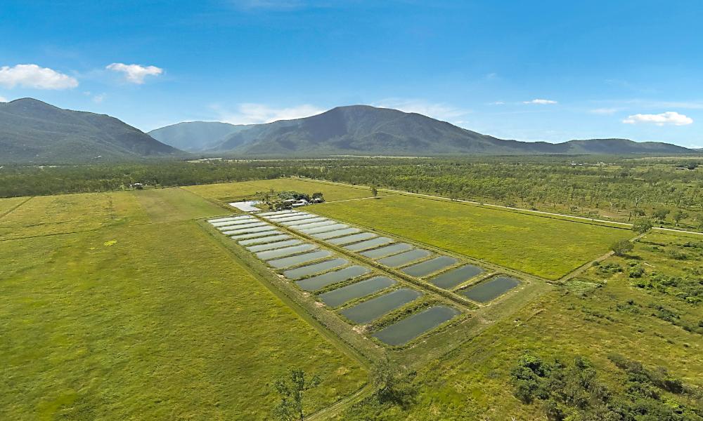Large-scale North Qld aquaculture farm hits the market
