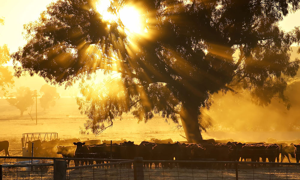 Future Drought Fund: Creating drought resilient crops in the NT