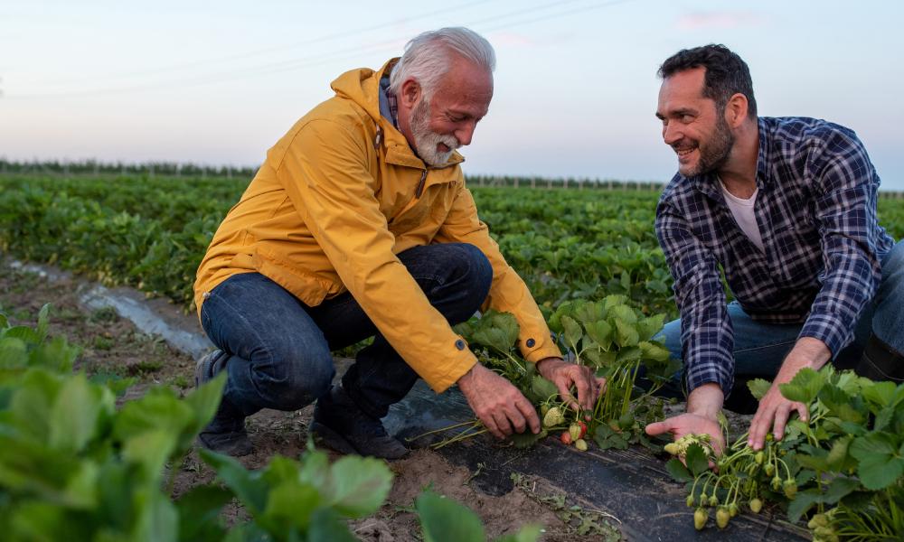 Farm biosecurity improves the management of soil-borne diseases