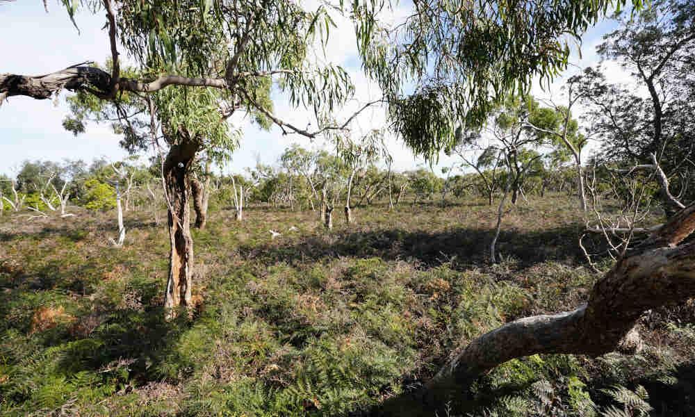 $160,000 for 'crucial habitat' for Gippsland Lakes Koalas