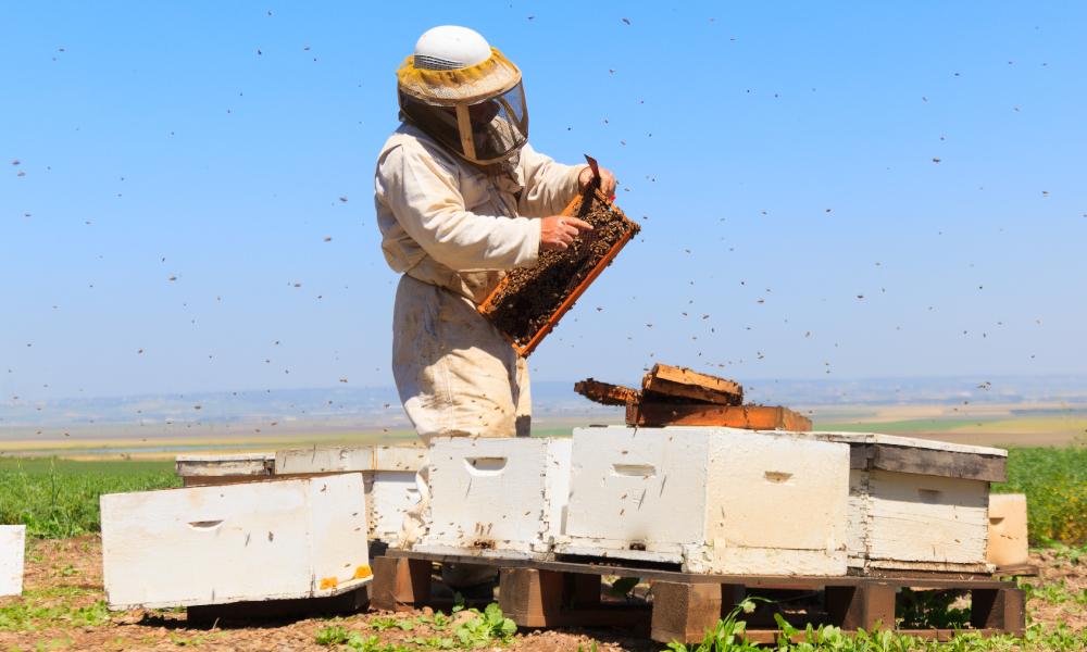 Celebrating the eradication of varroa mite